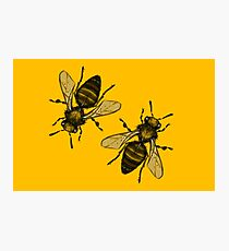 Bugs - Honey bee in ink Photographic Print