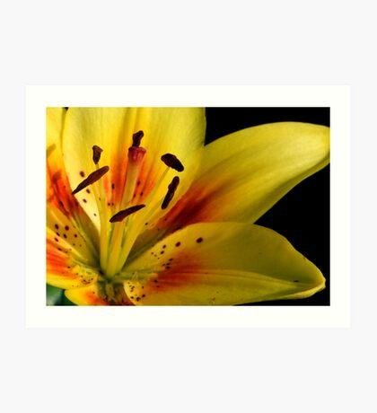 Lilies of the Yard 2 Art Print