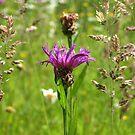 Summer Field Flowers by ienemien