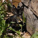 Tuxedo Kitty by BellaStarr