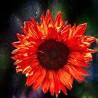 RED SUNFLOWER by LudaNayvelt
