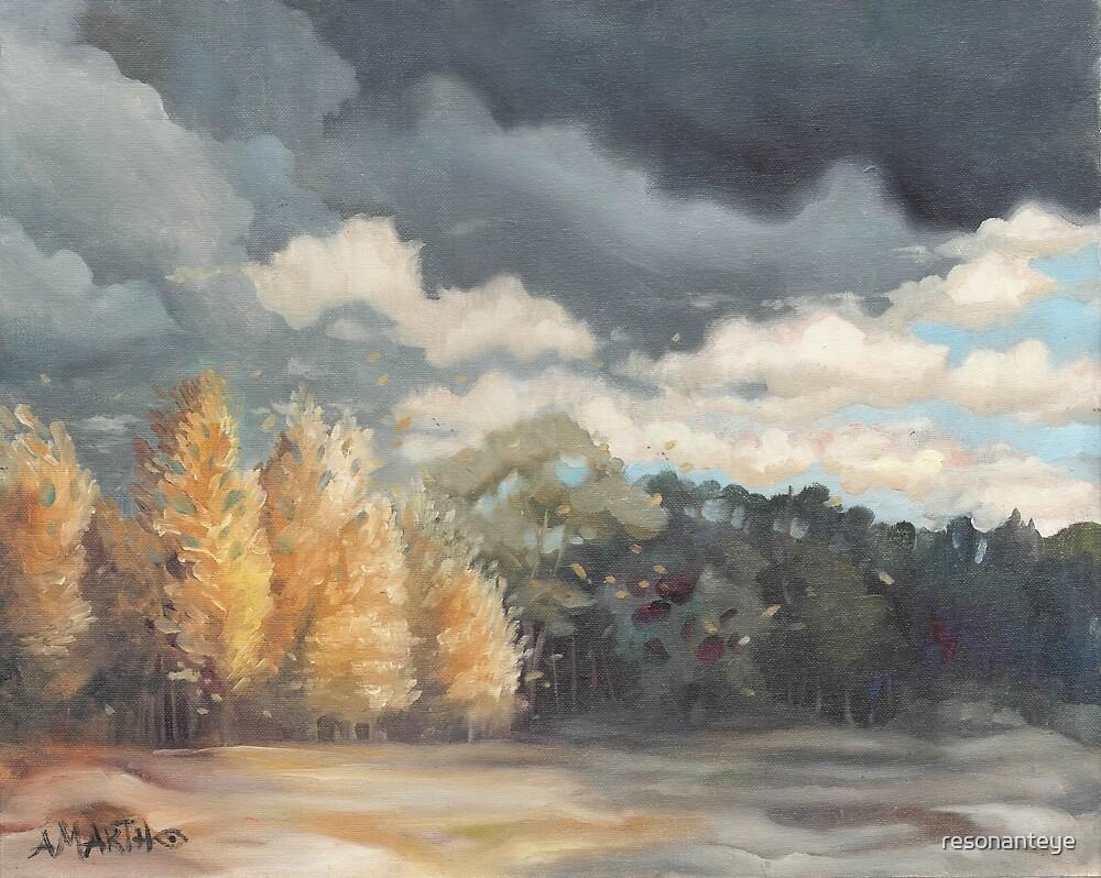 Birch trees in Benton County. by resonanteye