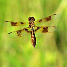 Fly Dragon Fly by Dawne Dunton