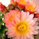 Soft And Prickly by Susan McKenzie Bergstrom