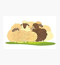 There is always a black sheep Photographic Print
