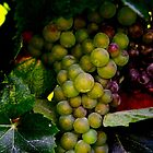 Artful Grapes by Barbara  Brown
