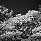 in bloom by Justin Waldinger