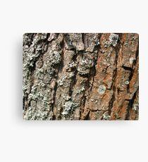Photo close up of wood bark Canvas Print