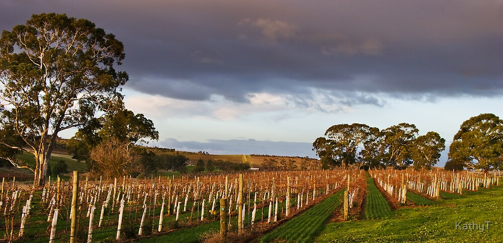 Sunset on the Vines by KathyT