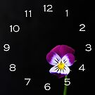 Violet Flower White Numbers Wall Clock by Alan Harman