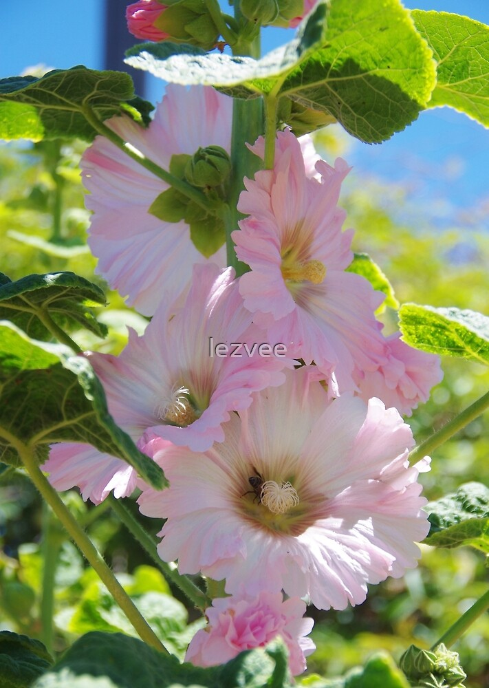 A Hollyhock In A Rose Garden by lezvee