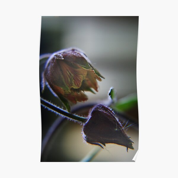 Nature sexy (from wild flowers collection) Poster