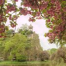 Buttes Chaumont Cherry Blossom Frame by Michael Matthews