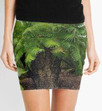Cycas micronesica Mini Skirt
