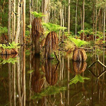 Sisters Creek at Myalla , Nor West Tasmania , Australia by phillip24