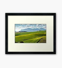 Canola fields Framed Print