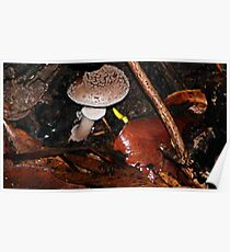 Mushroom hide out  Poster