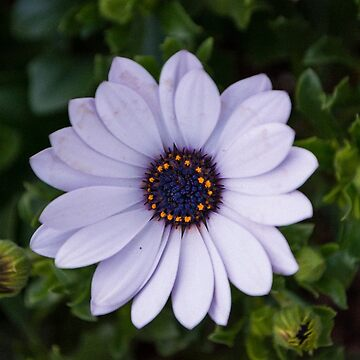 Beautiful Flower by sunilbhar
