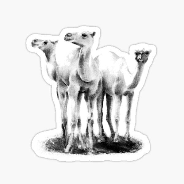 Trio of camels Sticker