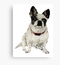 Black and White Frenchie Canvas Print