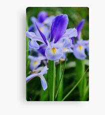Irises in a field Canvas Print