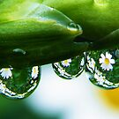 It is raining daisy's by Yool