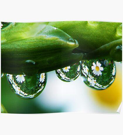 It is raining daisy's Poster