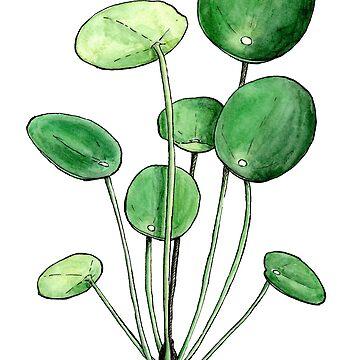 Pilea Peperomioides - Watercolour Plant Illustration  by patti2905