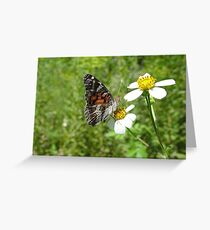 American Lady Greeting Card