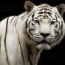 White Tiger by lurch