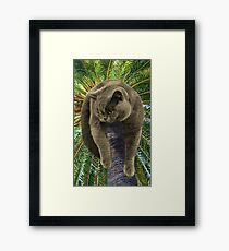 How Did I Get Up Here, and Now, How Do I Get Down?  Framed Print