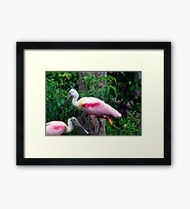 Pink Party Framed Print