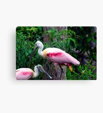 Pink Party Canvas Print