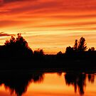 camel sunset by jaffa