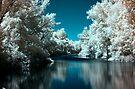Backwater (I.)  by zolim