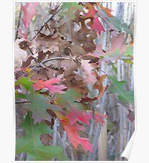 Strange Leaves - Night Fall, Celery Farm Marsh Poster