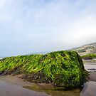 Low Tide At Charmouth 4 by Susie Peek