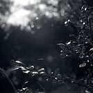 Botanical No.1 by Aden Albert