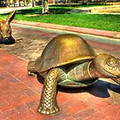 The Tortoise & The Hare by Jack DiMaio