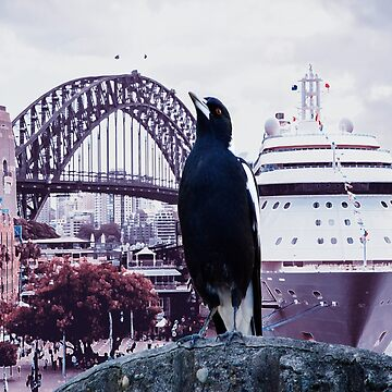Sydney Harbour Magpie by JoBling