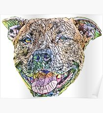 Staffordshire Bull Terrier Face Poster