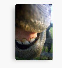 Needs Dental Work Bad Canvas Print