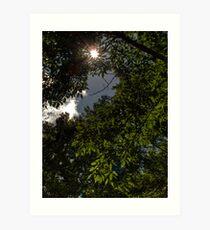 Tree Sunburst Art Print