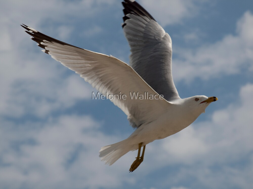 Airborne by Melonie Wallace