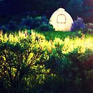 Sunlight by MRPhotography