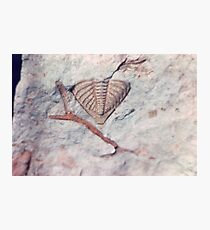 Trilobite and bryozoan fossils from Usk, Monmouthshire Photographic Print