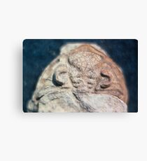 Dalmanites (trilobite) cephalis fossil from Usk, Monmouthshire Canvas Print