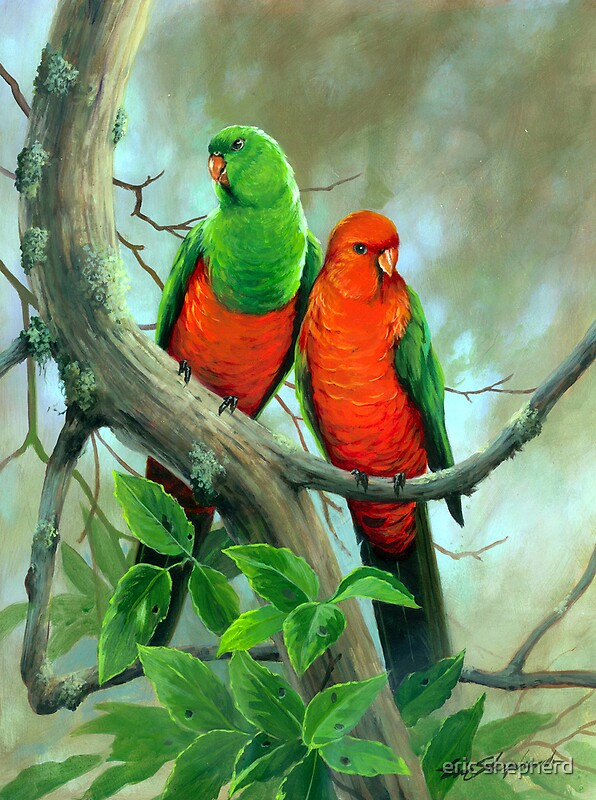 Quot Australian King Parrots Quot By Eric Shepherd Redbubble