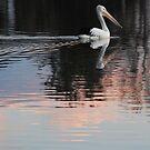 Pink Pelican by Graham Mewburn
