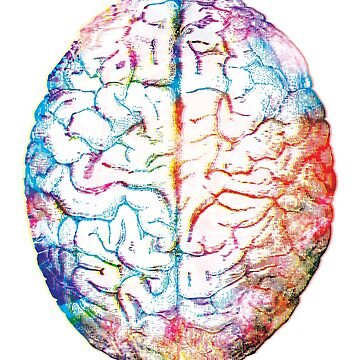 Human Brains - Colorful  by gifrancis